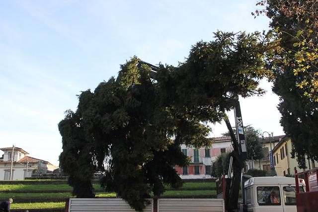 albero-di-natale-19-di-106