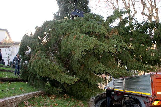 albero-di-natale-24-di-106