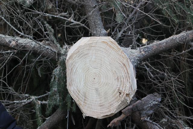 albero-di-natale-63-di-106