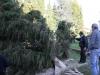 albero-di-natale-84-di-106