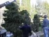 albero-di-natale-86-di-106