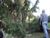 albero-di-natale-89-di-106