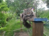 Tiger keeping watch