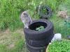 Luna potatoe gardening..
