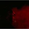 mr-pitiful-play-il-pane-e-le-rose-gallicano-2009011