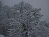 neve-renaio-11-di-133