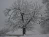 neve-renaio-20-di-133