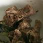 polenta-di-neccio-ossi-di-maiale-barga-011.jpg