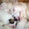 puppies-in-barga-002.jpg