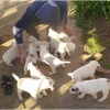 puppies-in-barga-009.jpg