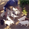 puppies-in-barga-011.jpg