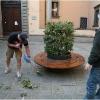 spring-weather-plant-trimming-piazza-salvi-barga-010.jpg