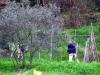 terra-operosa-catagnana-13-di-14