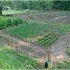 lorto-barganews-vegetable-garden-barga-2009001.jpg