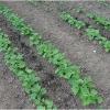 lorto-barganews-vegetable-garden-barga-2009002.jpg