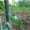 lorto-barganews-vegetable-garden-barga-2009005.jpg