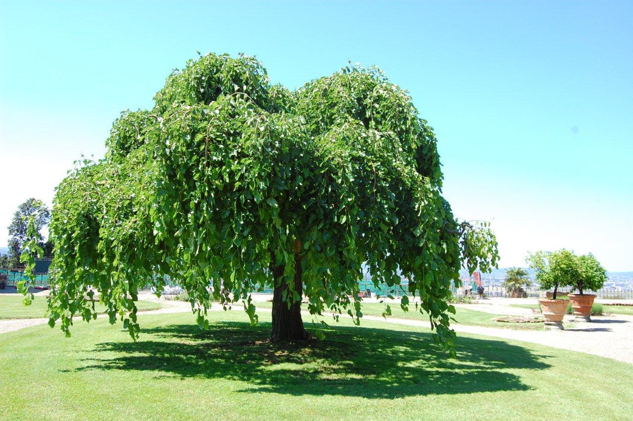 Sei regole per un albero felice il nostro barganews for Foto di alberi da colorare