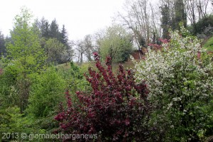 primavera a Catagnana