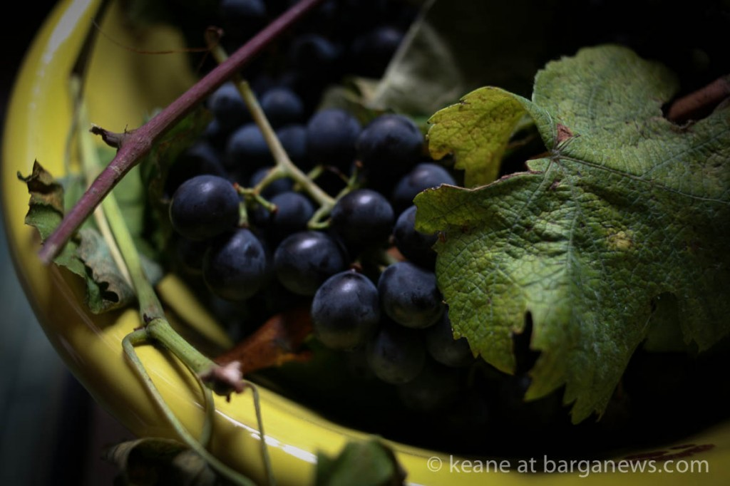 images from barga -3107