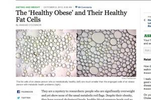 fat_cells